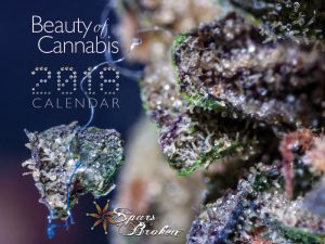 Beauty of Cannabis Calendar 2018