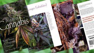 Sneak Peek at Beauty of Cannabis Book by Spurs Broken