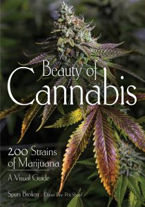 Front Cover of Beauty of Cannabis by Spurs Broken (Amherst Media)